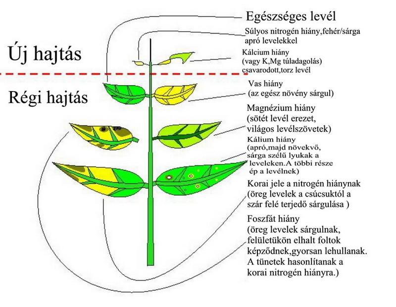 Vizinövények tápanyaghiány tünetei  624f30007e